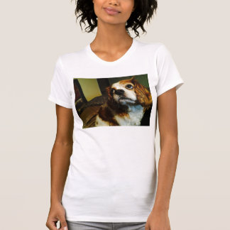 Cavalier King Charles Spaniel T-Shirts
