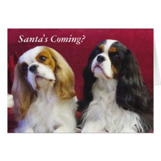 Cavalier King Charles Spaniels Christmas Card