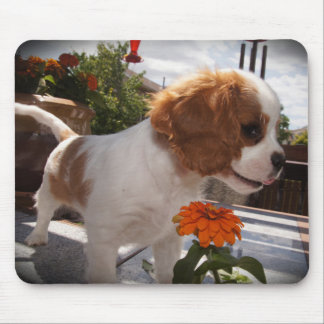 Cavalier Smelling Flowers Mouse Pad