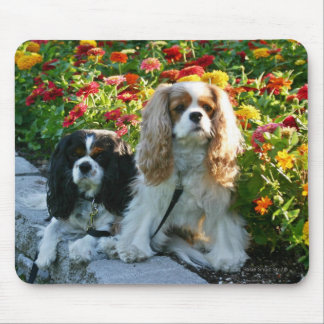 Cavaliers and Zinnias Mousepad