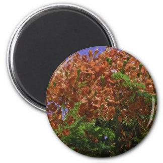 Cayman Islands 6 Cm Round Magnet