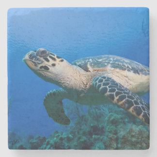 Cayman Islands, Little Cayman Island, Underwater 2 Stone Coaster