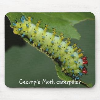 Cecropia Moth caterpillar Mouse Pad