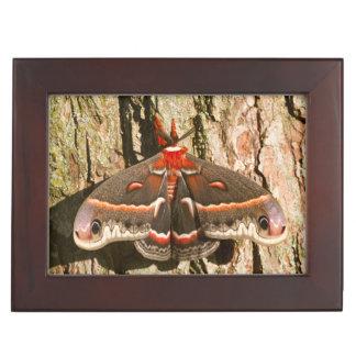 Cecropia Moth on tree trunk Keepsake Box