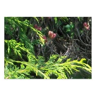 Cedar and Pink Dogword Closeup 2 Business Card