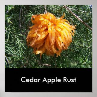 Cedar Apple Rust Fungus Poster