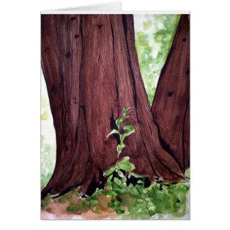 Cedar Beauty Card