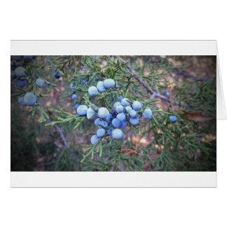 Cedar Berries Greeting Card
