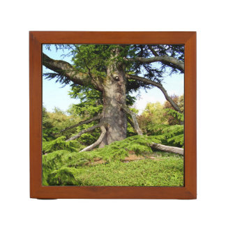 Cedar-of-Lebanon Tree Desk Organiser