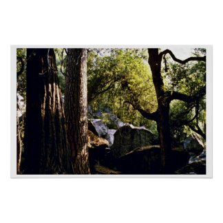 Cedar, Pine, And Oak Trees, Yosemite Valley Poster