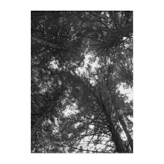 Cedar Tree Black and White Nature Forest Acrylic Acrylic Wall Art