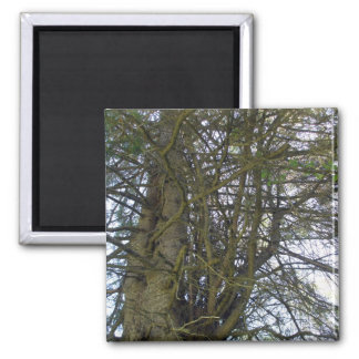 Cedar Tree Branches Magnet