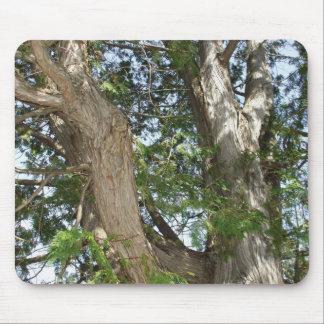 Cedar Tree Mouse Pad
