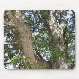 Cedar Tree Trunk in Sun Mouse Pad
