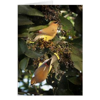 Cedar Waxwing Birds Greeting Card
