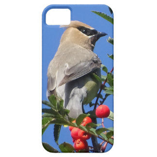 Cedar Waxwing iPhone 5 Cover
