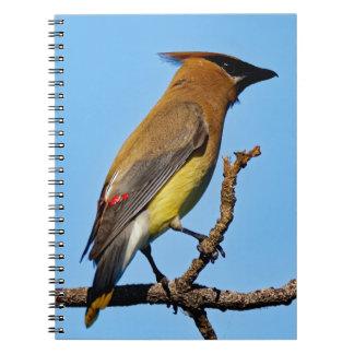 Cedar Waxwing on a Limb Notebook