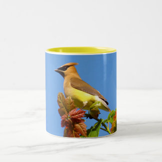 Cedar Waxwing Two-Tone Coffee Mug