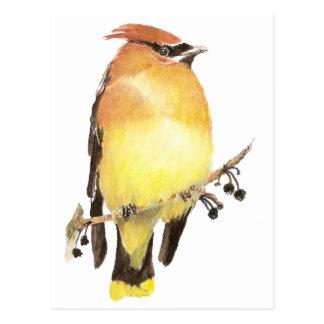 Cedar Waxwing, Watercolor Bird Postcard