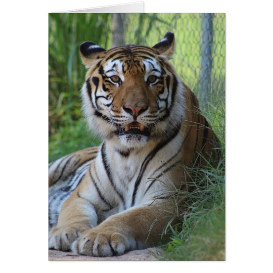 Cedarhill Animal Sanctuary Card