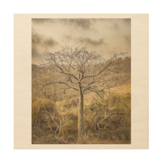 Ceiba Tree at Dry Forest Guayas District - Ecuador Wood Prints
