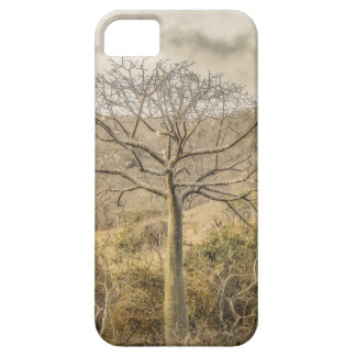 Ceiba Tree at Forest Guayas Ecuador Barely There iPhone 5 Case