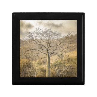 Ceiba Tree at Forest Guayas Ecuador Gift Box