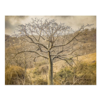 Ceiba Tree at Forest Guayas Ecuador Postcard