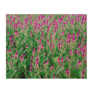 Celosia Flower Field Wood Print
