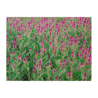 Celosia Flower Field Wood Wall Art