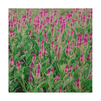 Celosia Flower Field Wood Wall Decor