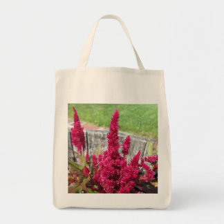 Celosia Red Rustic Fence Garden Bags