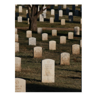 Cemetery Photography - Veterans Day - Memorial Day Postcard