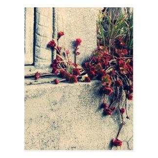 cemetery remembrance postcard