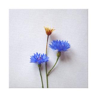 Centaurea Cyanus blue flower on a light background Canvas Print