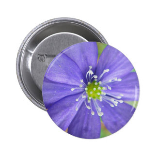 Center of a blue flower with white stamps pin