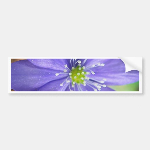 Center of a blue flower with white stamps bumper sticker
