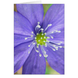 Center of a blue flower with white stamps card