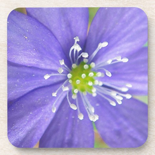 Center of a blue flower with white stamps coasters