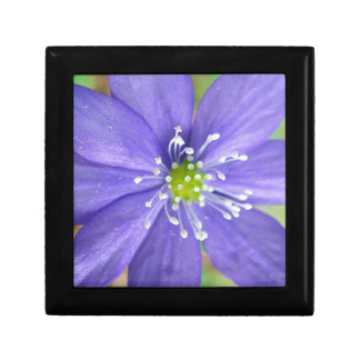 Center of a blue flower with white stamps trinket box