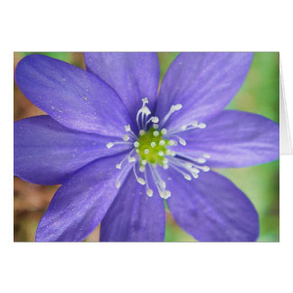 Center of a blue flower with white stamps greeting card