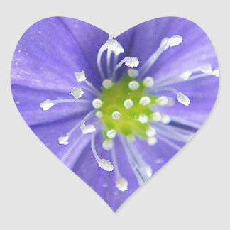 Center of a blue flower with white stamps heart sticker