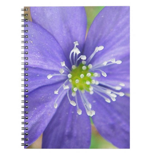 Center of a blue flower with white stamps spiral notebook