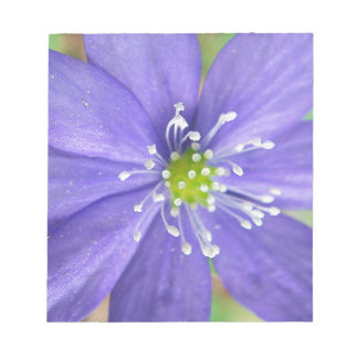 Center of a blue flower with white stamps scratch pads