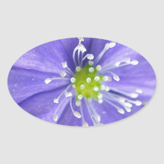 Center of a blue flower with white stamps oval sticker