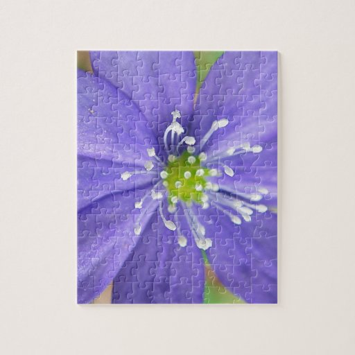 Center of a blue flower with white stamps jigsaw puzzle