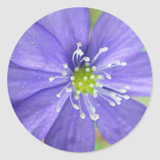 Center of a blue flower with white stamps round sticker