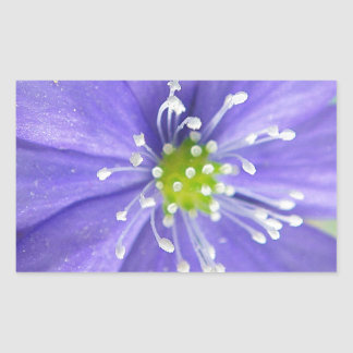 Center of a blue flower with white stamps rectangular sticker