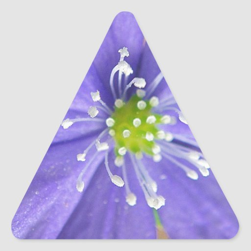 Center of a blue flower with white stamps triangle stickers