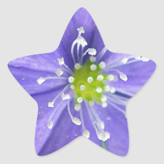 Center of a blue flower with white stamps star sticker